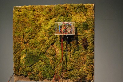 Acoustic Mirror_Moss