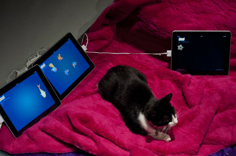 Cats Only iPad Play Zone